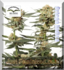 Dutch Passion Ortega Indica Fem 10 Ganja Seeds